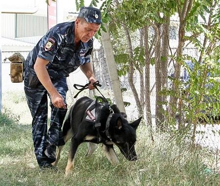 Андрей Мишанин – лучший кинолог севастопольской полиции