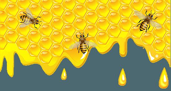 Поддержка пчеловодства в Севастополе