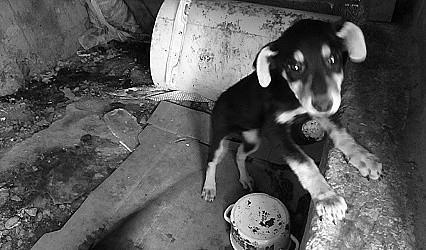 К ответственности за жестокое обращение с животными
