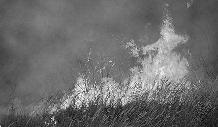 В севастопольских лесах снят пожароопасный период