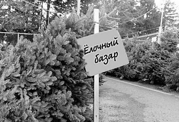 К Новому году в Севастополе откроется 27 елочных базаров