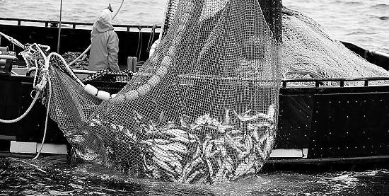Рыбоводные хозяйства смогут продлевать право пользования без проведения торгов