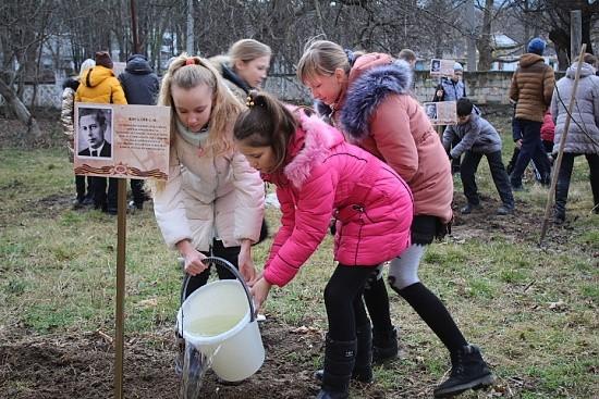Дерево Героя Севастополь