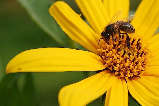 цветы с пчелой