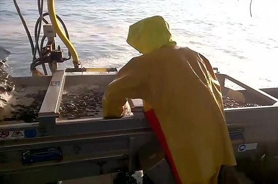 В Севастополе строится новая морская ферма