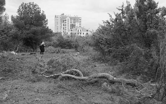 Ущерб от вырубки краснокнижных деревьев составил около 8 миллионов