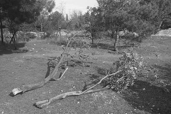 В парке Севастополя повредили краснокнижные растения