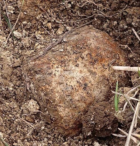 бомба в Севастополе