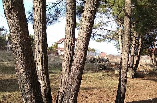 природа в Севастополе