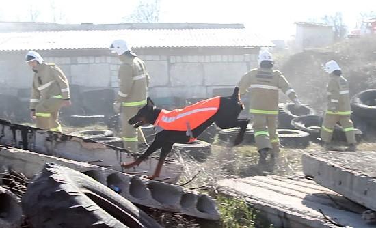 собака на взрыве дома