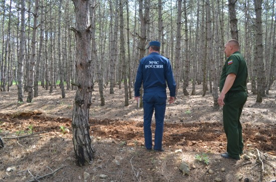 противопожарная полоса в лесу