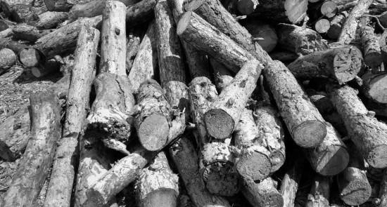 «Севастопольский лесхоз» приступил к заготовке древесины