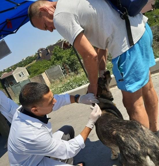 Продолжается бесплатная вакцинация собак и кошек против бешенства