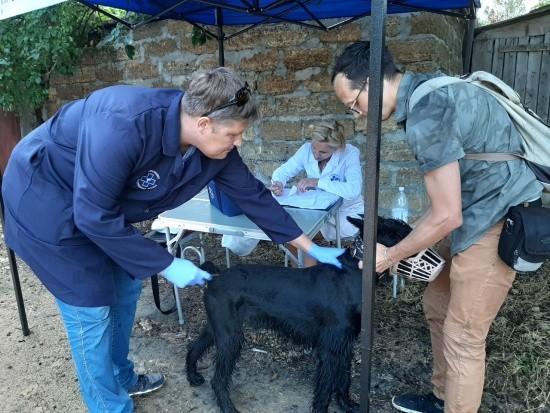 В Севастополе продолжается вакцинация собак и кошек