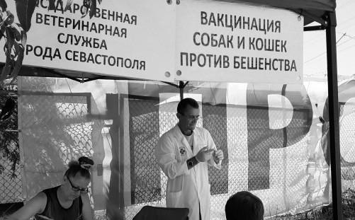 В Севастополе продолжается бесплатная вакцинация собак и кошек