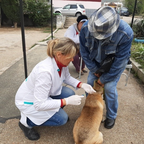 Продолжается бесплатная вакцинация собак и кошек