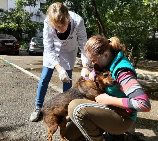 Очередная вакцинация собак и кошек против бешенства прошла в Севастополе
