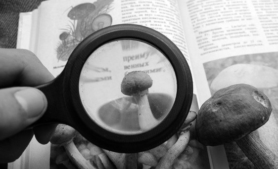 Будьте бдительны при сборе, покупке и приготовлении крымских грибов