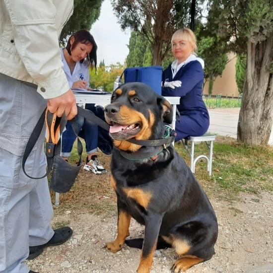 За выходные в Севастополе привили 188 домашних животных