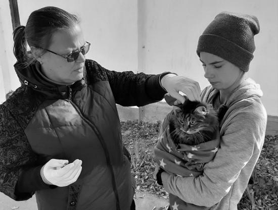 За выходные в Севастополе ветеринары привили 318 домашних животных