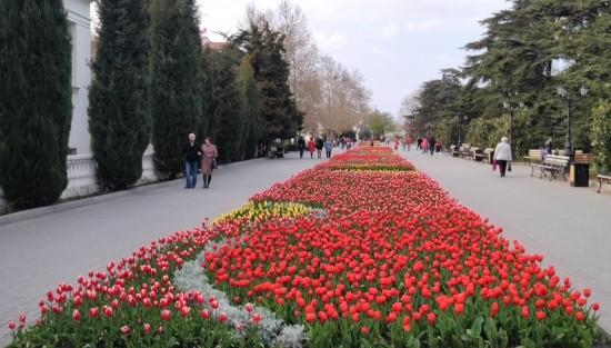 В Севастополе высаживают весенние цветы