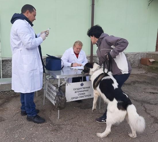 В рамках очередной вакцинации привито 213 домашних животных