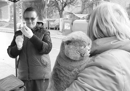 В Севастополе прошла очередная бесплатная вакцинация собак и кошек