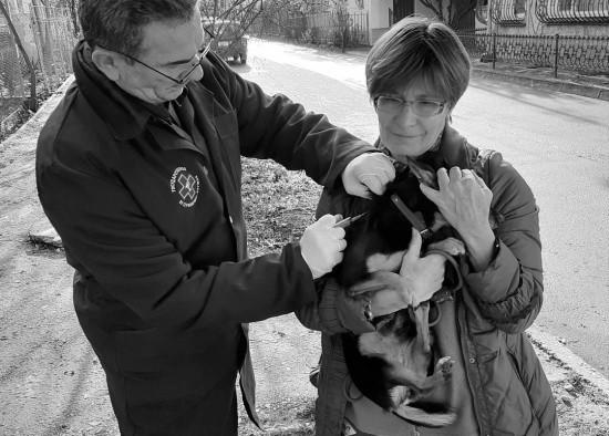 В рамках очередной вакцинации привито 286 домашних животных
