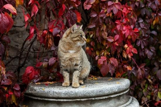 Херсонесские коты музея-заповедника