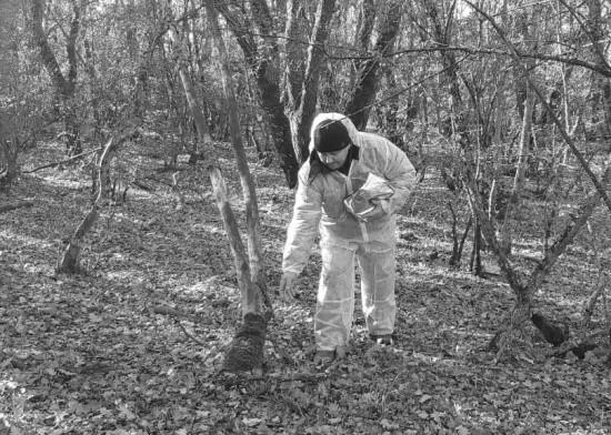 В Севастополе завершена вакцинация диких хищных животных против бешенства