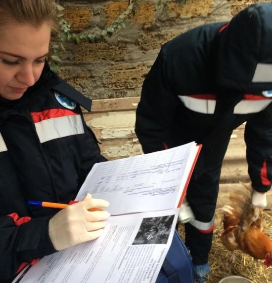В Севастополе проводится бесплатная вакцинация домашней птицы