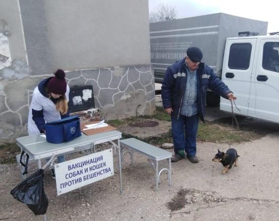Очередной этап вакцинации домашних животных прошел в Севастополе