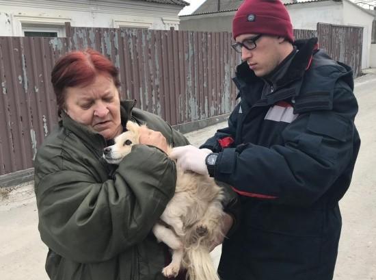 В Севастополе продолжается вакцинация домашних животных