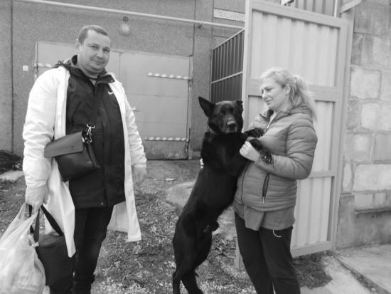 В селе Терновка ветеринары привили 229 животных