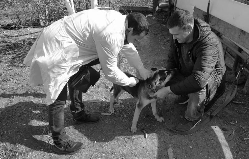 В рамках очередной вакцинации привито 203 собаки и кошки