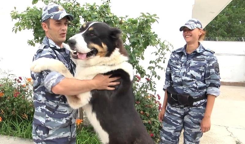 Севастопольские полицейские-кинологи рассказали о жизни своих питомцев