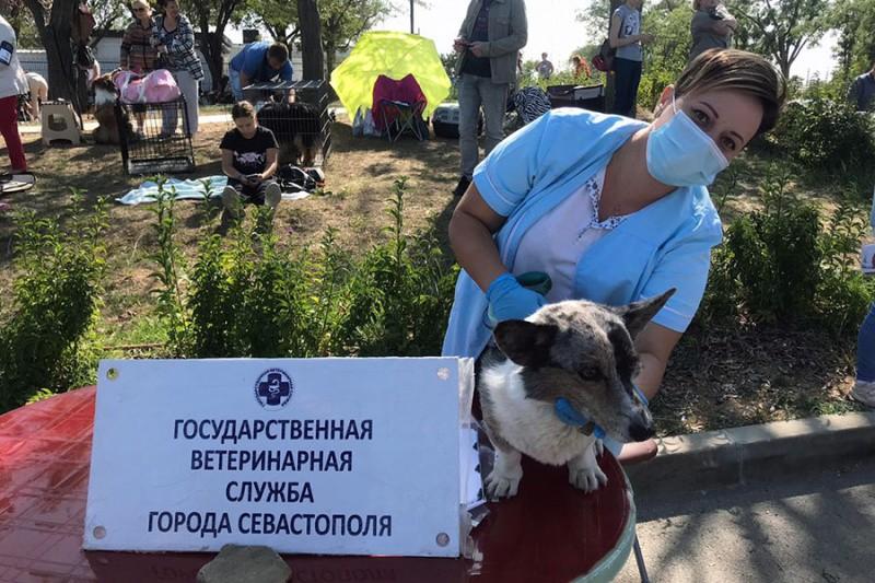 Выставки собак в Севастополе проходят под контролем ветеринарных специалистов