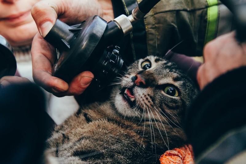 На пожаре в Севастополе спасли людей и котов