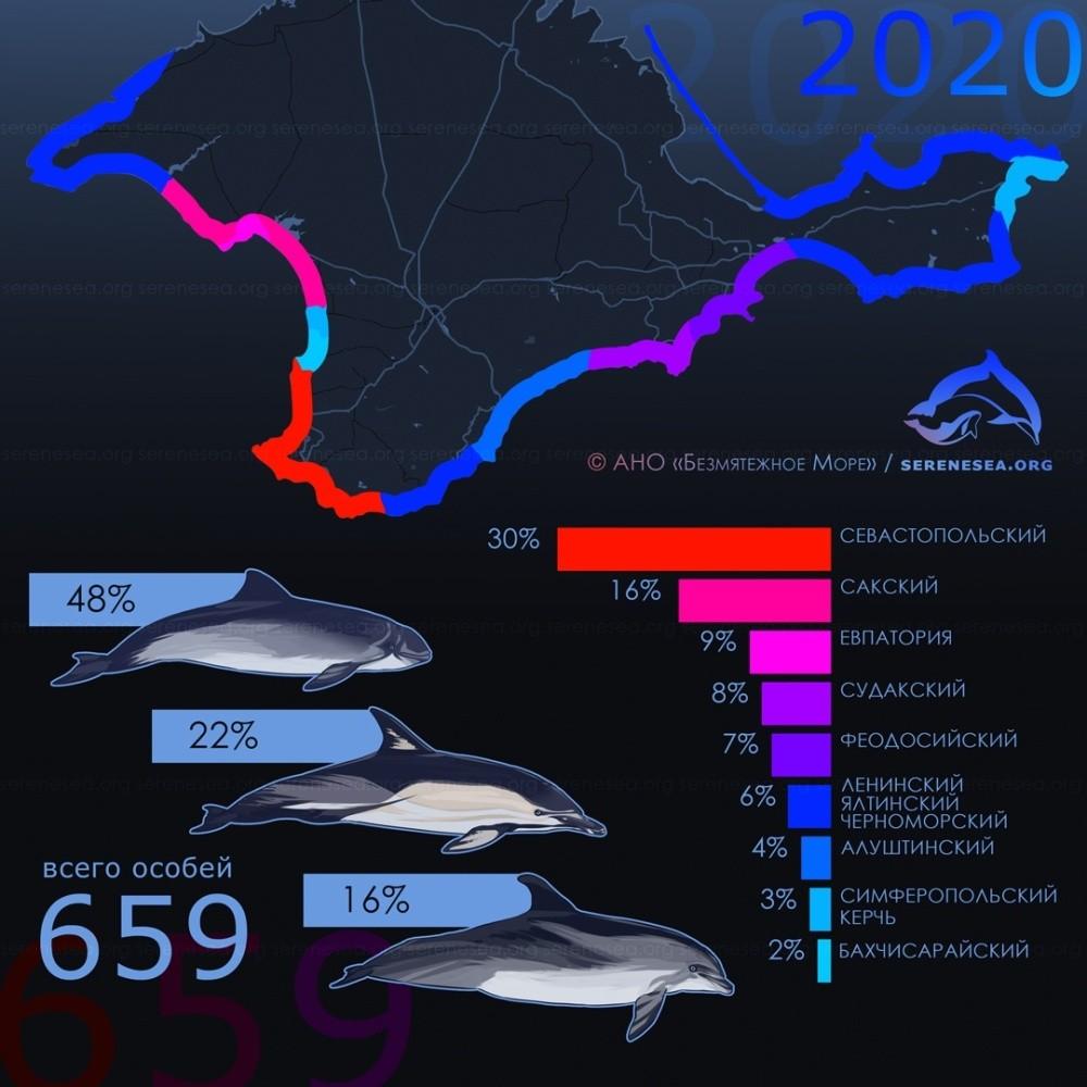 Центр «Безмятежное Море» озвучил результаты мониторинга выбросов китообразных в Крыму