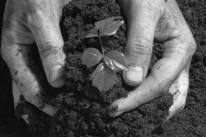 В Севастополе научились делать уникальные органические удобрения