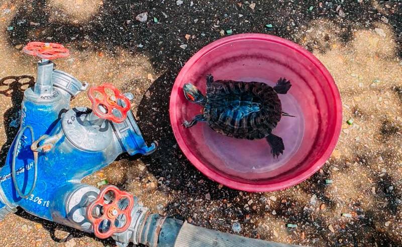 Пожарные спасли черепаху из горящей квартиры в Севастополе