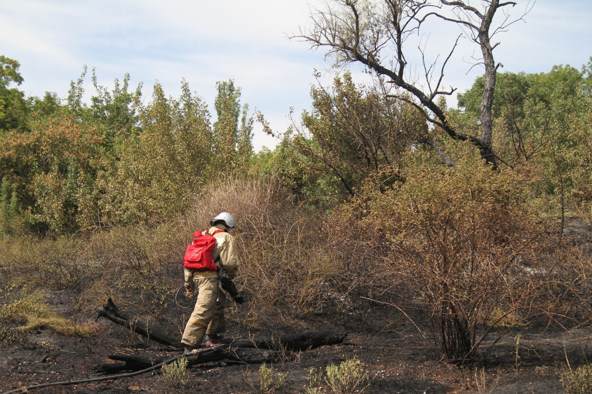 Почти 6 гектаров сухой травы и растительности сгорело за сутки в Севастополе